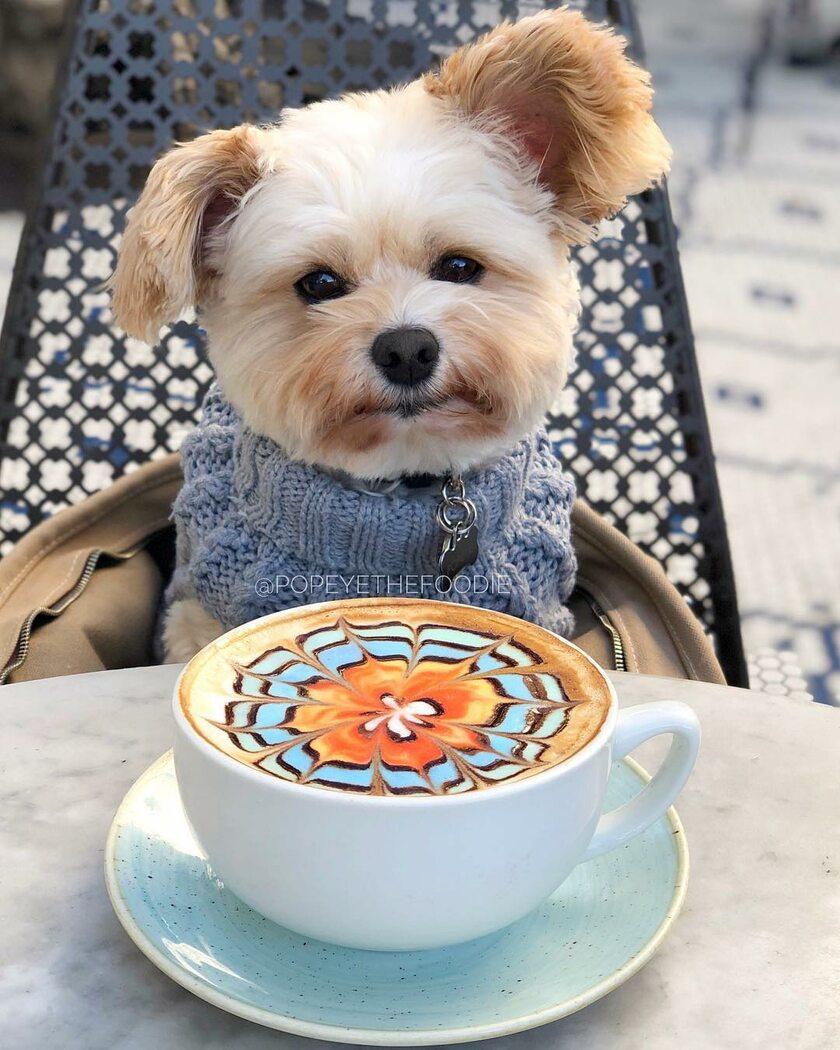 собачка с добрым утром картинки цвет получается счёт